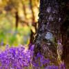 Цветочные древесно-мускусные