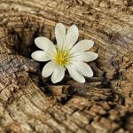Древесные цветочные мускусные