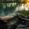 Древесные водяные
