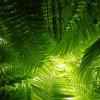 Фужерные зеленые