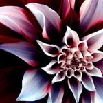 Шипровые цветочные